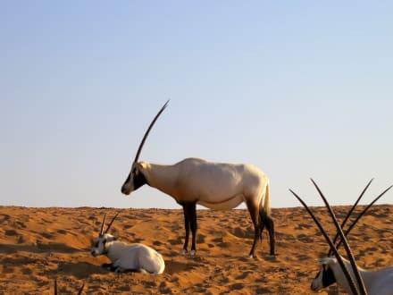 Wüstentour Dubai - Wüstentour Dubai