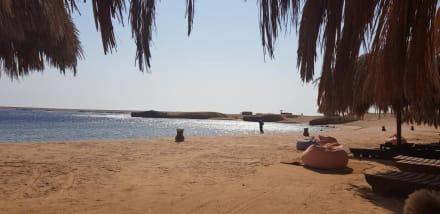 Sharm El Naga  - Delfinausflug mit Mo