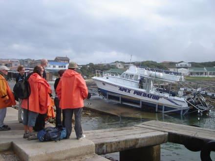 Ausflugsboot - Shark Cage Diving