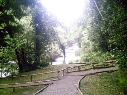 Fussweg entlang ser Y.S. Wasserfällen - YS Falls / Y.S. Wasserfälle