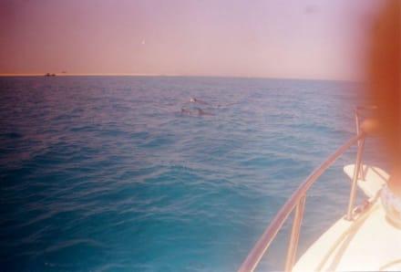 Delphine - Delfin Tour Hurghada