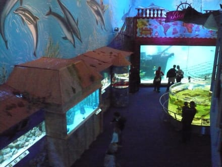 Leisure (other) - Morsky Svet Aquarium