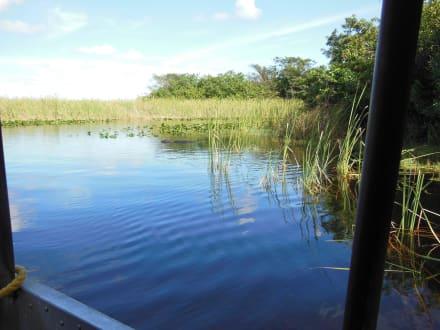 Sumpf - Everglades National Park