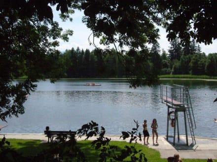 Sprungbrett & Floß - Sulzberger See