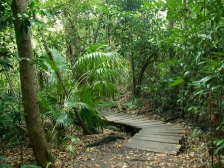 Dschungelpfad - Sian Ka'an
