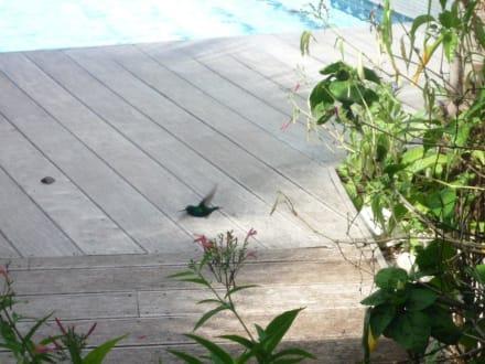 Kolibri - Frangipani Apartments