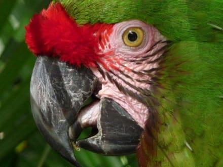 Auge-in-Auge mit einem wunderschönen Papagei - Bali Bird Park