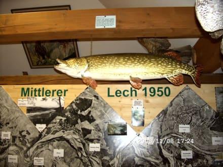 Hecht in der Fischer - Kleinmuseum Klösterle