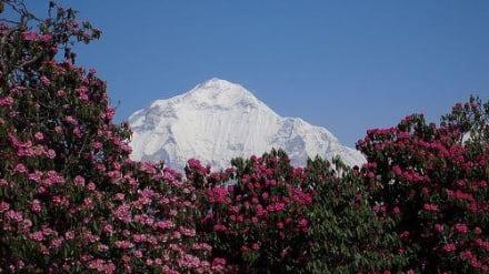 Jomsom Trekk - Trekking Team PVT. LTD Katmandu