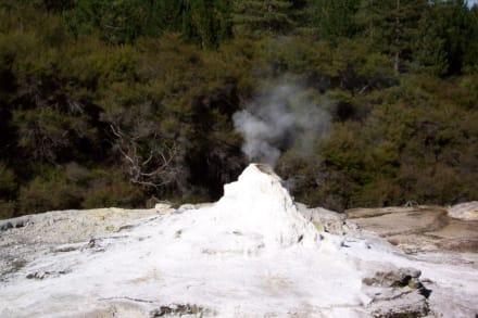 Wai o Tapu Wonderland - Geysir in Rotorua