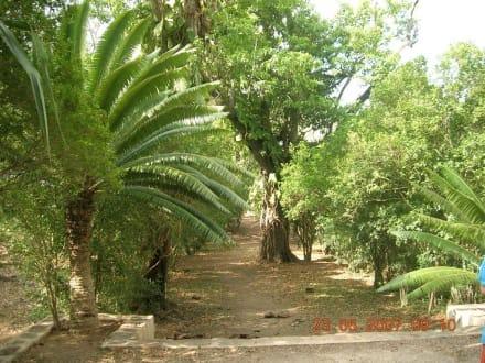 Gartenanlage Hacienda - Sisal Hacienda Yaxcopoil