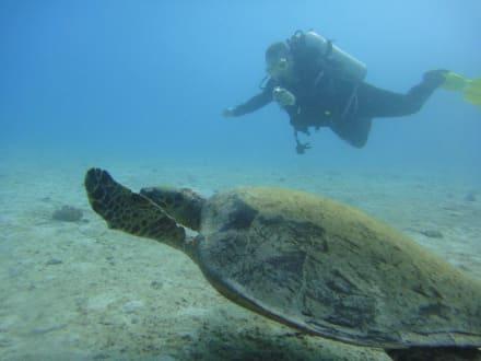 Gemütliche Schildi - Delfinschwimmen Delfine & Meer
