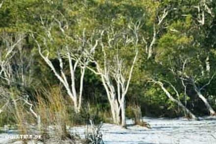 Fraser Island - Fraser Island