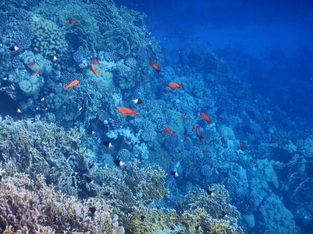 Die Unterwasserwelt am Außenriff - Schnorcheln Hausriff Three Corners Fayrouz Plaza