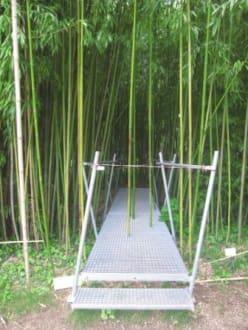 Bilder Botanischer Garten Wien Einst Begehbarer Bambushain Wien