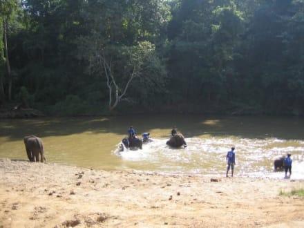 Beim baden haben die Elefanten viel Spaß. - Maeping Elephant Camp