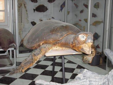 Meerschildkröte - Aquarium