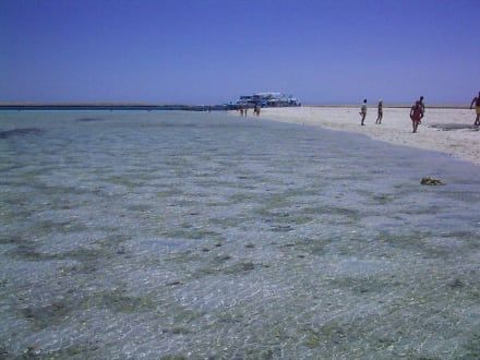 Barrakuda - Hier Schnorcheln? - Tauchbasis Deep Blue Divers Hurghada