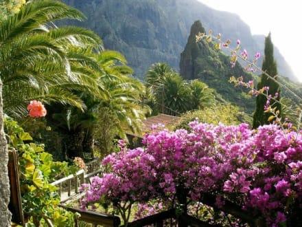 Blütenpracht Dez. 2003 in Masca/Teneriffa - Masca Schlucht (geschlossen)