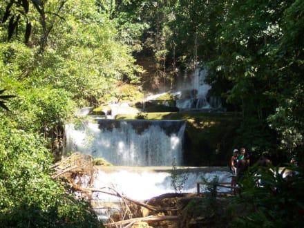 Wasserfall - YS Falls / Y.S. Wasserfälle