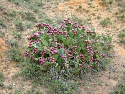 Flora - Ranch Mabrouka