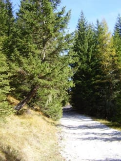 Waldweg - Wandern St. Vigil in Enneberg