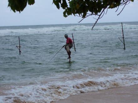 Stelzenfischer - Stelzenfischer Koggala