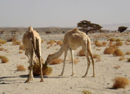 Nature reserve/Zoo - Wadi Lahamy Park