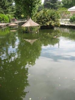Campo del Moro - Jardines del Campo del Moro