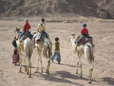 Ritt mit den Tromedaren - Beduinen