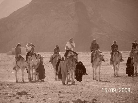Kamelreiten in der Wüste - Wüstentour Hurghada