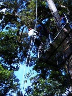Canopy -Tour - Selvatura Park - Canopy Tour