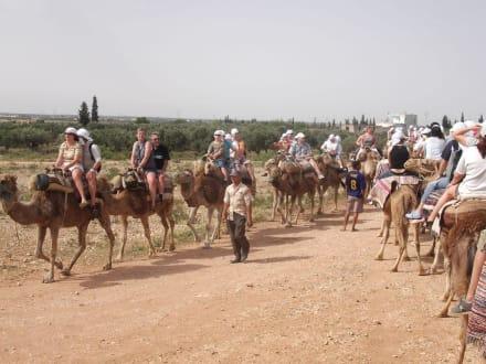 Kameltour im Umland von Sousse - Kameltour