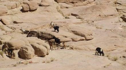 Sonstiges Landschaftmotiv - Mosesberg (Gebel Musa) / Berg Sinai