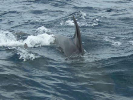 Delfine - Whale Watching Tarifa