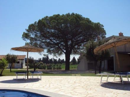 Pool und Garten - Hotel Santa Maria Resort
