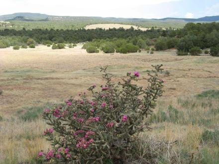Landschaft im Pecos Historical Park - Pecos National Historical Park