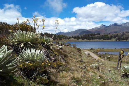 Lake Mucubaji - Laguna de Mucubaji