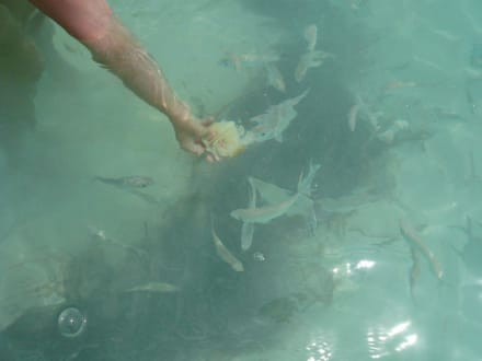 Fische - Isla Saona