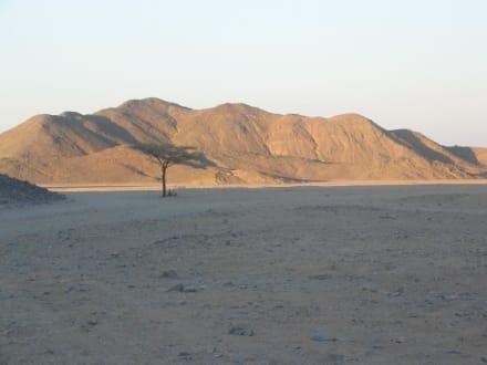 Primasol Beach Albatros Resort - Wüste