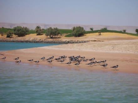 Mittagspause - Lagunenfahrt durch El Gouna