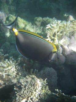 Echt tolle Fische - Schnorcheln Marsa Alam