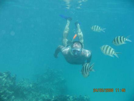 Hotel-Strand - Schnorcheln Sharm el Sheikh