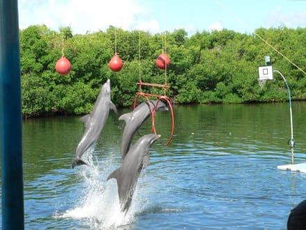 Delfine bei Kunststück - Delfinarium Varadero