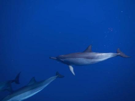 Copyright Gerd S. - Delfinschwimmen Delfine & Meer