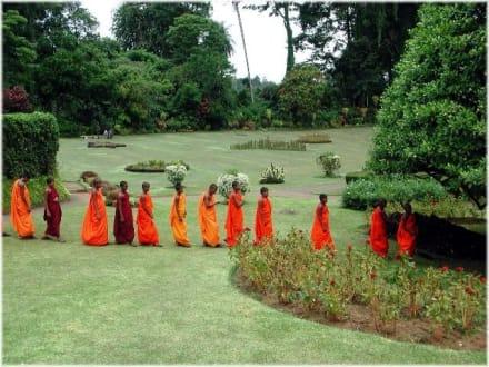 Mönche im Botanischen Garten - Botanischer Garten Peradeniya