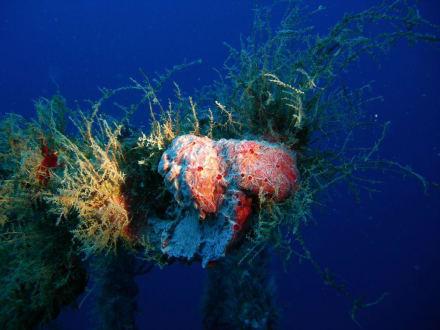 Schwämme - Unterwasser