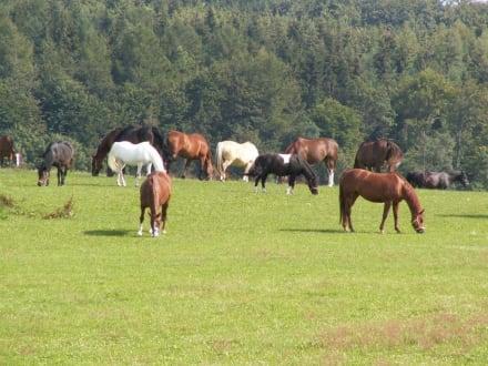 Pferde - Reitanlage Härtsfeldhof