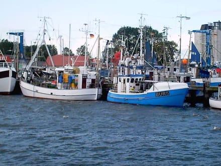 Burgstaaken Hafen v. Burg - Hafen Burg auf Fehmarn