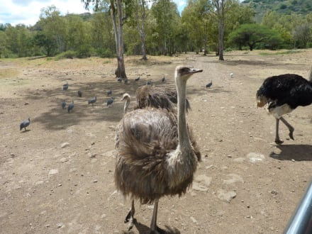 Nature reserve/Zoo - Casela Bird Park